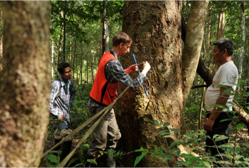 Tropical forests not as untouched as often thought