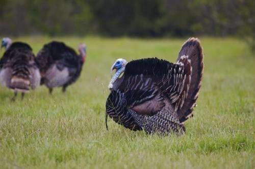 [Image: turkey.jpg]