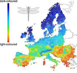 Light-colored butterflies and dragonflies thriving as European climate warms
