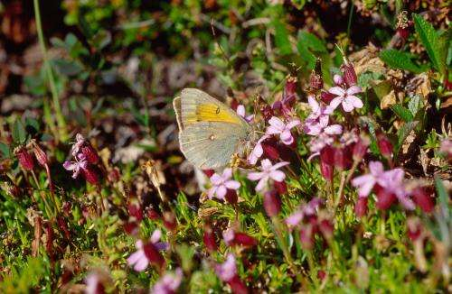 Unique new dataset CLIMBER: Climatic niche characteristics of the butterflies in Europe