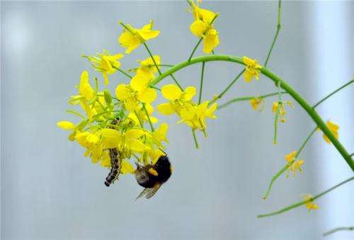 Using different scents to attract or repel insects