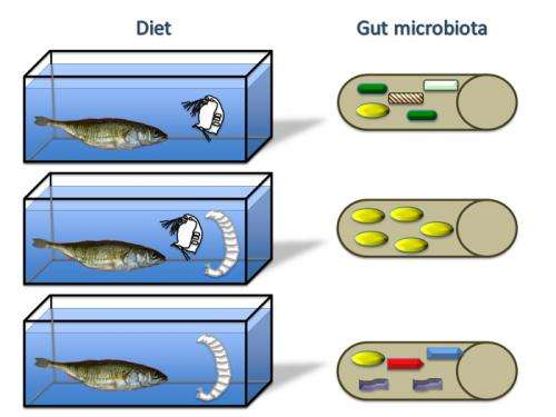 Variety in diet can hamper microbial diversity in the gut