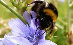 Variety the spice of life for pollinating insects