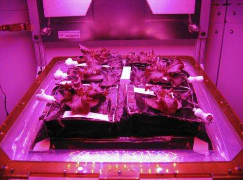 Veggie will expand fresh food production on space station