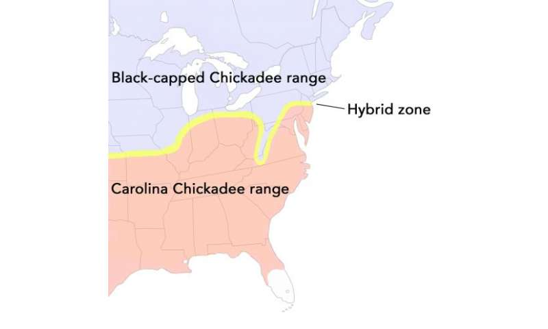 Warming temperatures are pushing 2 chickadee species -- and their hybrids -- northward