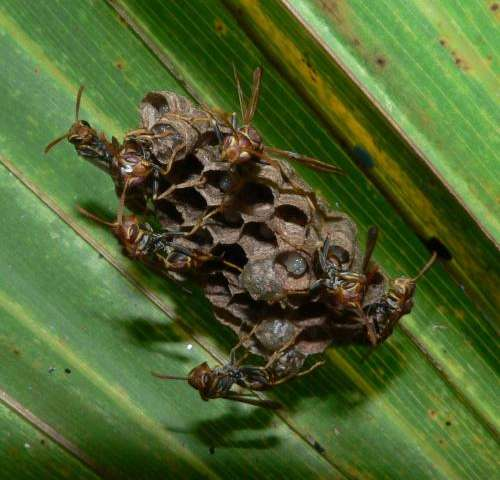 What cooperation and conflict in an insect's society can teach us about social acceptance