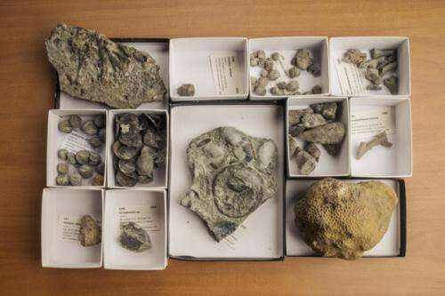 Whst brachiopods can tell us about how species compete, survive, or face extinction