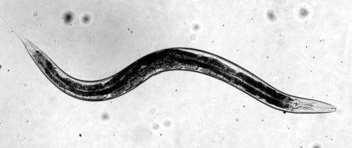 Worm virus details come to light