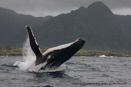 Scientists identify core skin bacterial community in humpback whales