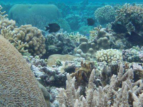 Some corals adjusting to rising ocean temperatures, research says