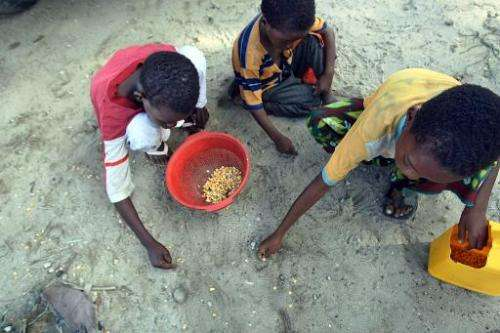 Young Somali internally displaced persons salvage maize seeds at a food-aid distribution point outside Mogadishu, Somalia on Jun