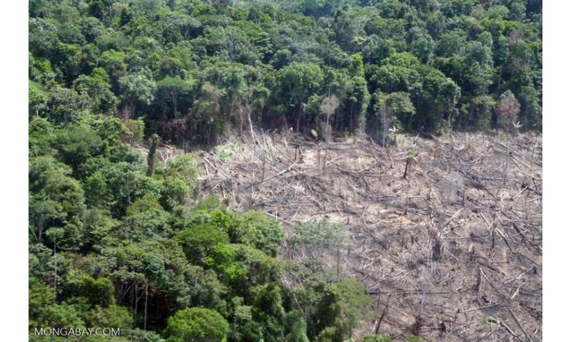 Amazon rainforests could transition to savannah-like states in response to climate change, new study predicts
