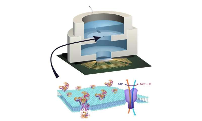 Columbia engineers build biologically powered chip
