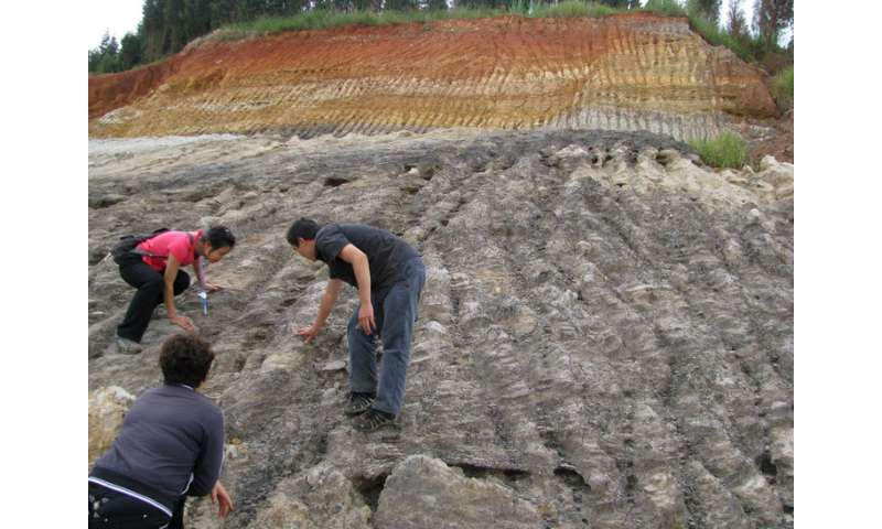 Eat a paleo peach—first fossil peaches discovered in southwest China