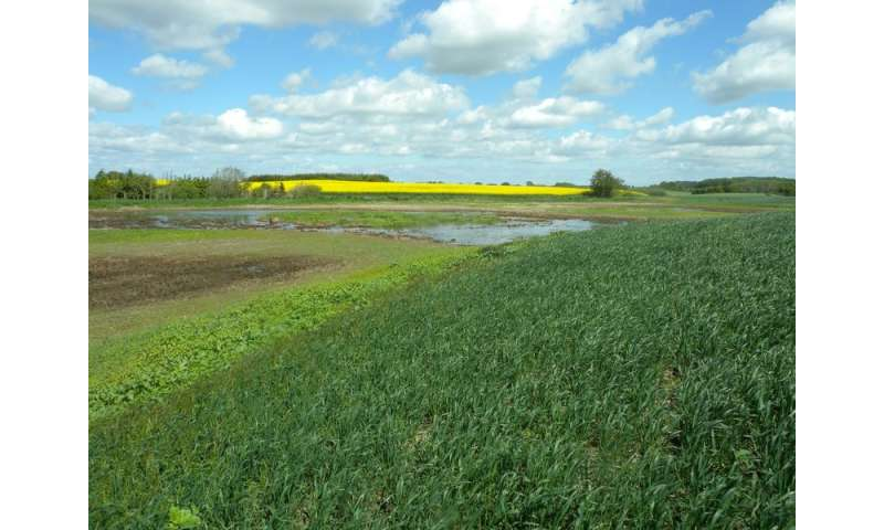 Growing crops on organic soils increases greenhouse gas emissions