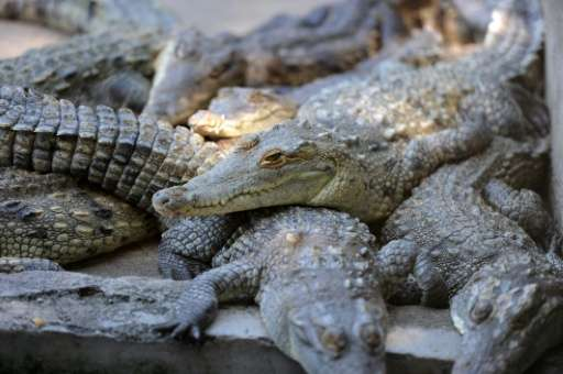More than 10,000 crocodiles are starving to death on a farm in Honduras after the wealthy family owning them had their assets fr