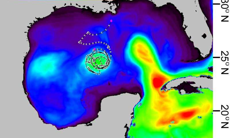Ocean heat content reveals secrets of fish migration behaviors