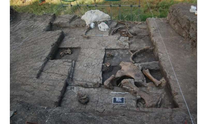 Paleolithic elephant butchering site found in Greece