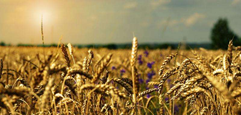 Photosynthesis gene can help crops grow in adverse conditions