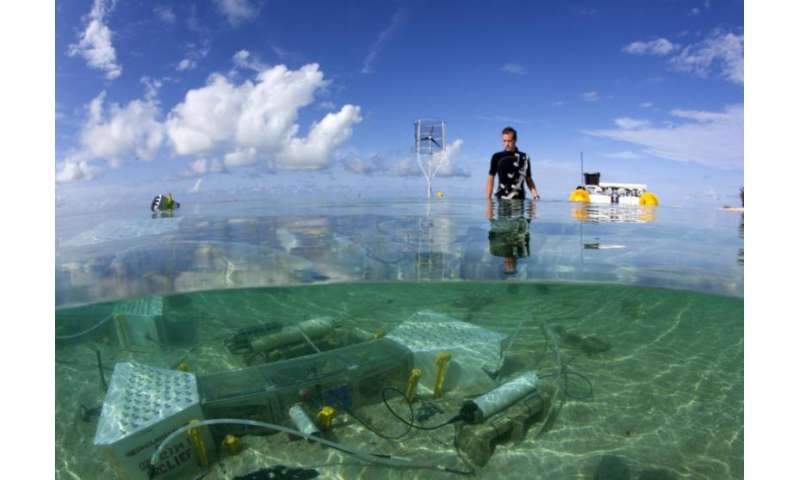 Self-regulating corals protect their skeletons against ocean acidification