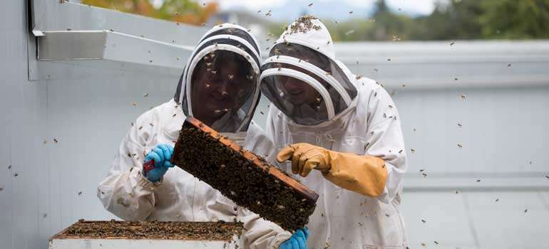 Students develop probiotic to protect bees from neonicotinoids