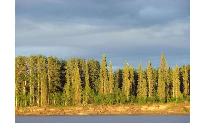 a study on the taiga forest Nau scientists lead dod project to assess environmental impact of changing climate on  the boreal forest, or taiga,  to assess environmental impact of changing.