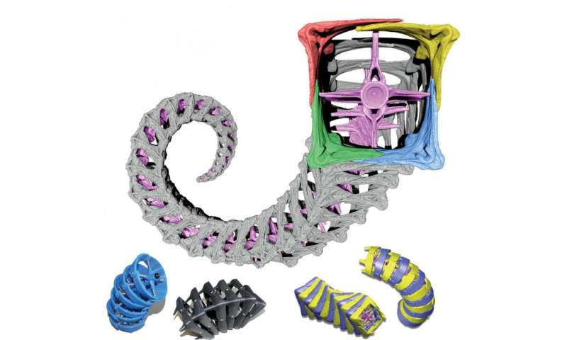 Tough tail of a seahorse may provide robotic solutions