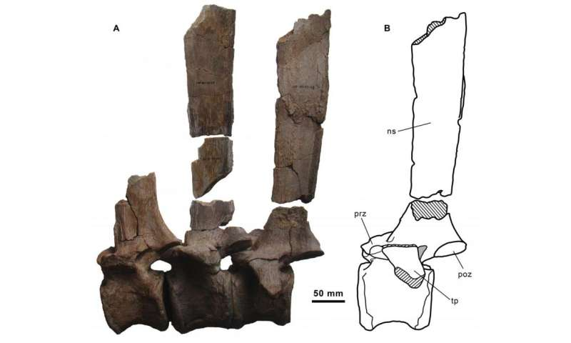 New species of 'sail-backed' dinosaur found in Spain