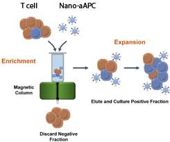 Magnetic nanoparticles could be key to effective immunotherapy