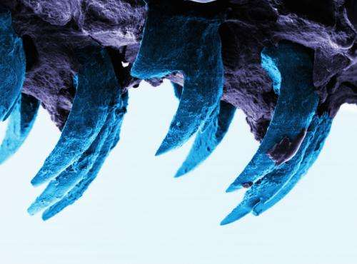 Scientists find strongest natural material