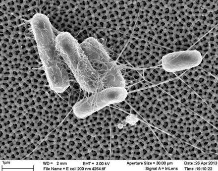 Germs Be Gone! New Technology Keeps Bacteria From Sticking to Surfaces