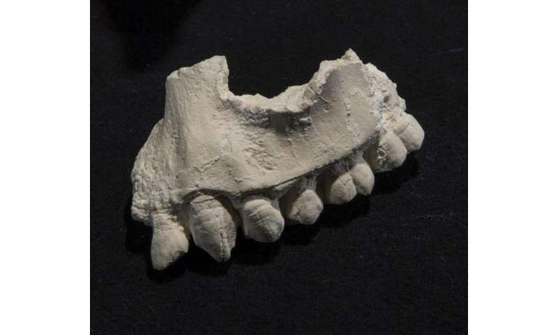 New human ancestor species from Ethiopia lived alongside Lucy's species