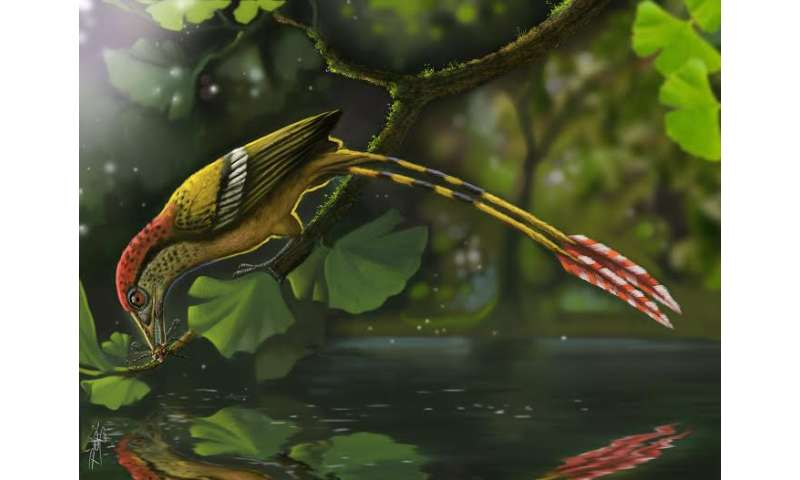 Small bird fills big fossil gap