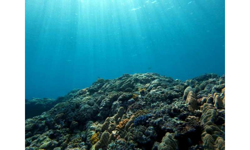 Warmer, lower-oxygen oceans will shift marine habitats