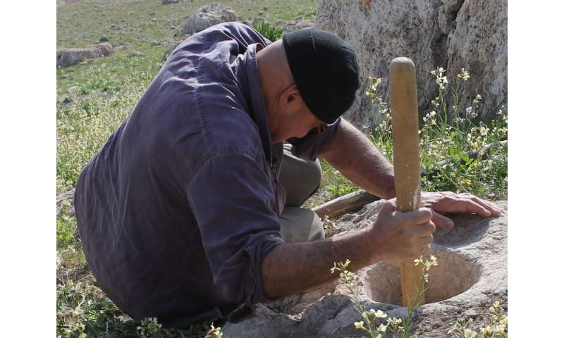 Where bread began: Ancient tools used to reconstruct -- and taste -- prehistoric cuisine
