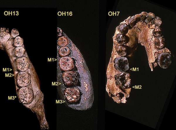 Researcher argues that there's more to the genus Homo than we may think