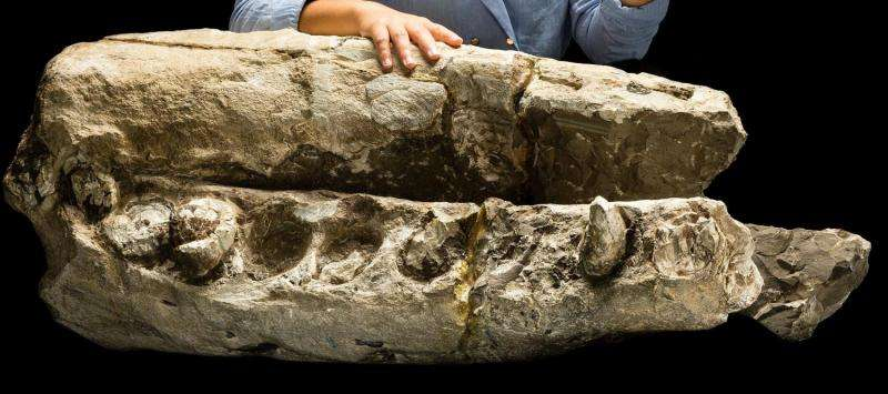 Scientists discover 'white whale' fossil
