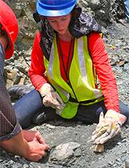 Researchers ID pigment from fossils, revealing color of extinct animals