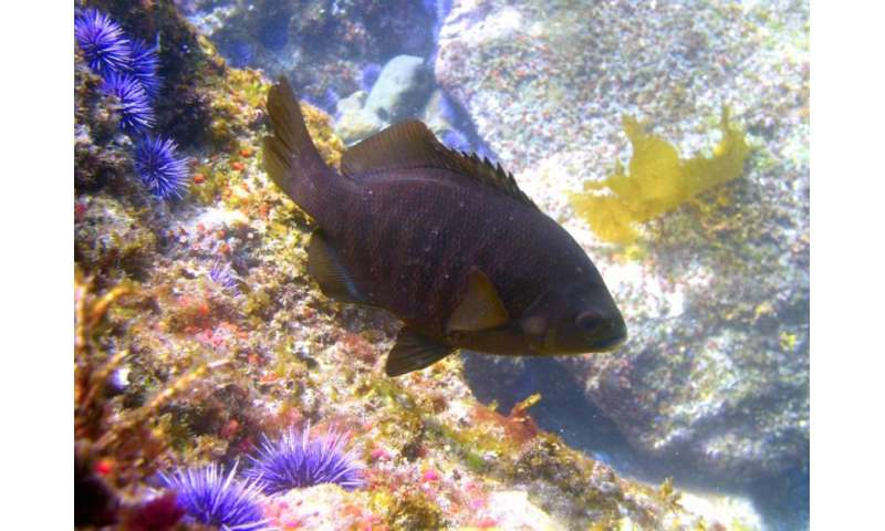 Marine fish are influenced by the food supply upon which for Kettle of fish