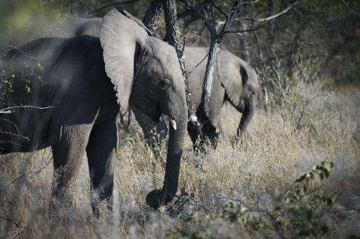 Poachers kill half Mozambique's elephants in five years, survey finds