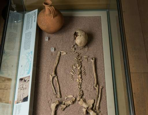 """An undated image received from The Museum of London on November 23, 2015 shows the displayed skeleton of """"The Harper Road W"""
