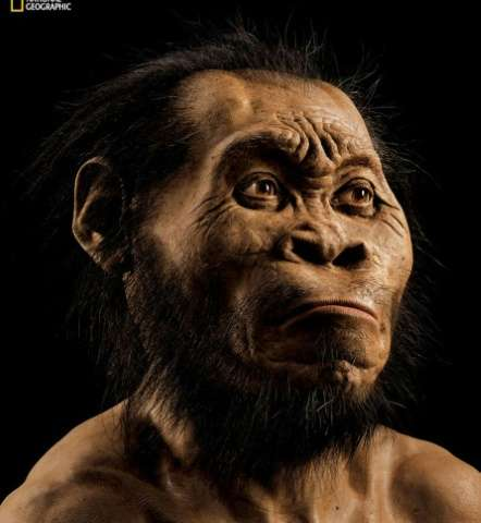 A reconstruction of a Homo naledi face by paleoartist John Gurche at his studio in Trumansburg