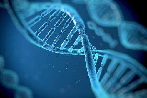 Bioengineers develop tool for reprogramming genetic code