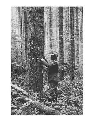 Cascades study may rewrite the textbook on forest growth and death