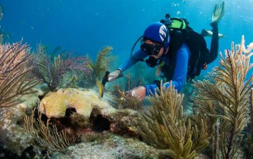 Diving instructor Patti Gross plants coral and scrubs algae off coral as part of a gardening project at Alligator Reef in the Fl