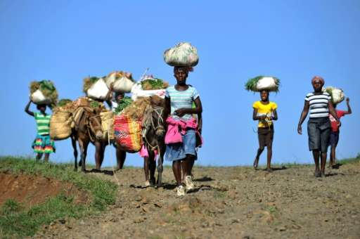 Donkeys carry vegetables from the fields of La Visite National Park