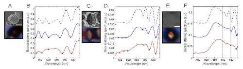 Experimental and theoretical backscattering spectra of PPC
