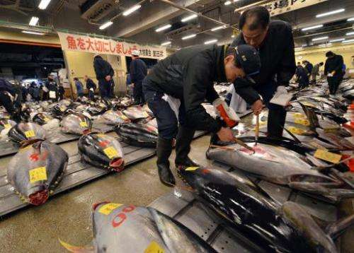 Fishmongers inspect bluefin tuna before the first trading of the new year at Tokyo's Tsukiji fish market on January 5, 2015