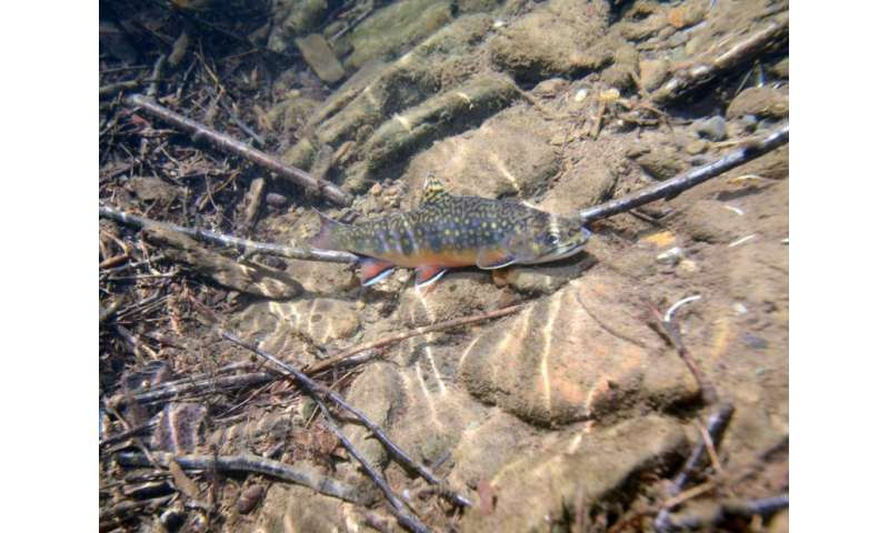 For trout fishermen, climate change will mean more driving time, less angling