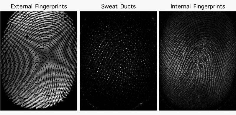 Internal fingerprint sensor peers inside fingertips for more surefire ID
